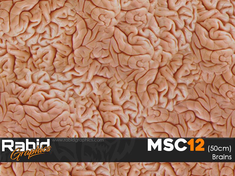 Brains (50cm)